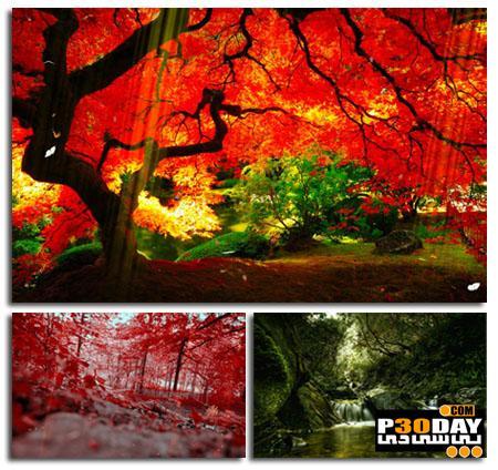 دانلود اسکرین سیور و والپیپر متحرک رویایی Planet Garden Screensaver