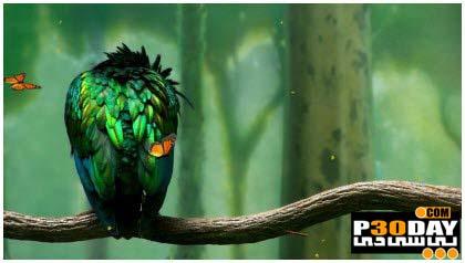 دانلود اسکرین سیور فوق العاده زیبای Green Bird Screensaver