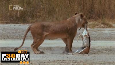 دانلود مستند قاتلان بی رحم Wild Brutal Killers 2012