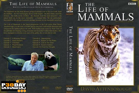 دانلود مستند دیدنی زندگی پستانداران  ( بصورت کامل ) The Life of Mammals