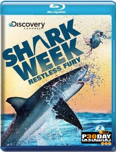 دانلود مستند شهر کوسه ها Discovery Channel – Shark Week: Shark City 2011