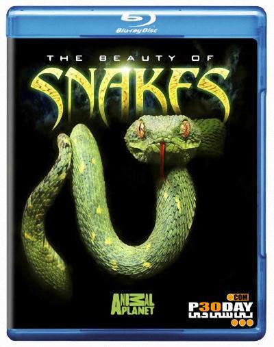 دانلود مستند زیبایی مارها Discovery Channel – The Beauty of Snakes 2008