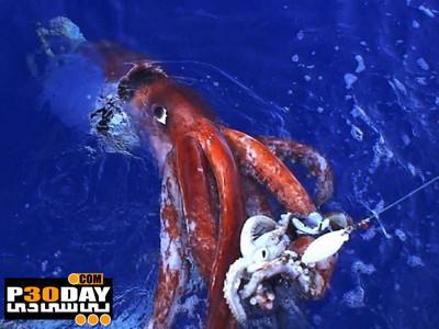 مستند حیوان عظیم الجثه National Geographic – Wild Catching Giants 2012