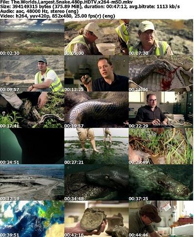 مستند بزرگترین مار دنیا Channel 4 - The World's Largest Snake 2012