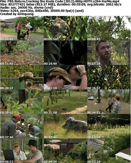 دانلود مستند خرس کوآلا PBS - Nature: Cracking the Koala Code 2012