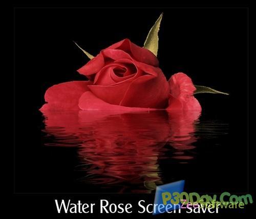 اسکرین سیور بسیار زیبای گل رز Water Rose Screensaver