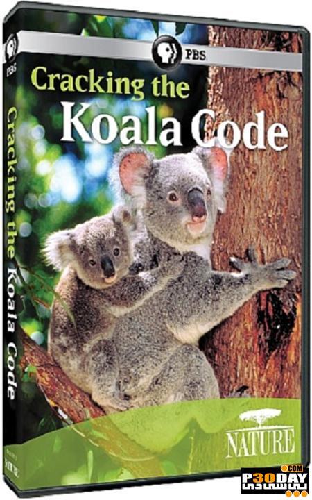 دانلود مستند خرس کوآلا PBS – Nature: Cracking the Koala Code 2012