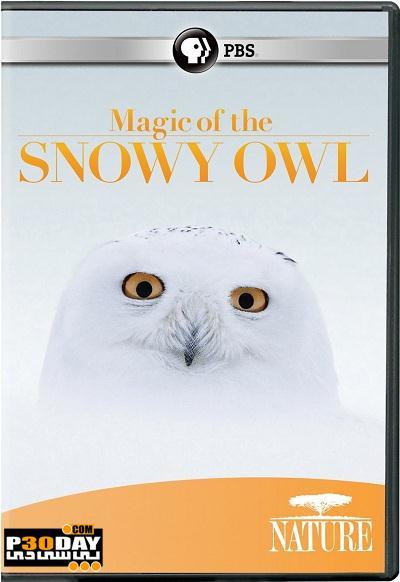 دانلود مستند جغد برفی PBS – Nature: Magic of the Snowy Owl 2012
