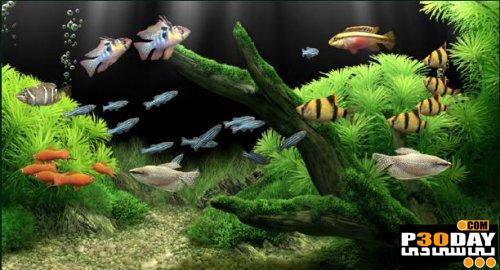 دانلود آکواریوم زیبا و رویایی Dream Aquarium 1.2415 Screensaver