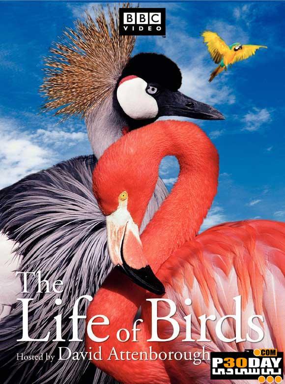 دانلود مستند زندگی پرندگان ( بصورت کامل ) The Life of Birds 1998