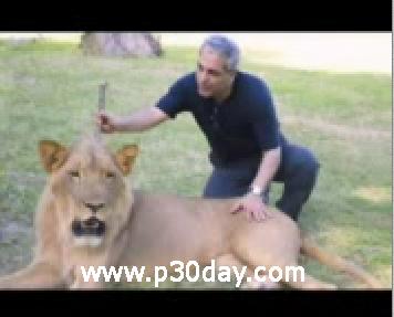 کلیپ مهران مدیری در قفس شیرها در قاره افریقا