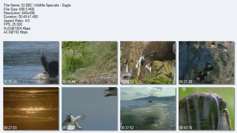 دانلود مستند حیوانات استثنایی ( بصورت کامل ) Wildlife Specials