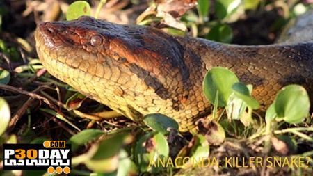 دانلود مستند آناکوندا – بزرگترین مار قاتل