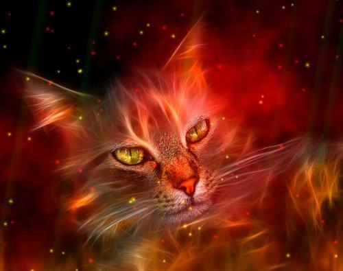 دانلود اسکرین سیور زیبای Fire Element Screensaver 1.2