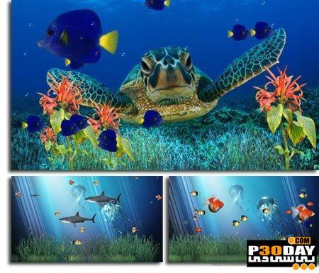 دانلود اسکرین سیور آکواریوم Coral Reef Aquarium Screensaver