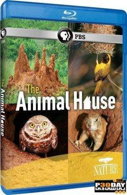 دانلود مستند خانه حیوانات PBS   Nature: The Animal House