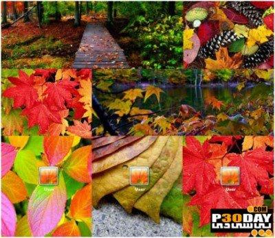 دانلود تم پائیز Autumn Leaves برای ویندوز 7