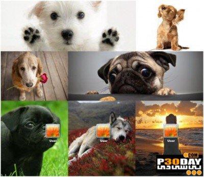 دانلود تم جالب و زیبای Dogs Theme برای ویندوز 7