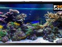Aquarium Live Wallpaper v1.6 - پسزمینه زنده آکواریوم