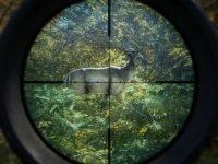 دانلود بازی theHunter Call of the Wild برای کامپیوتر + آپدیت