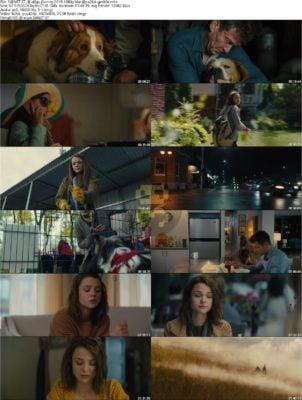 دانلود فیلم A Dogs Journey 2019 با زیرنویس فارسی